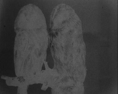 The Hand Eye (Bone Ghosts)