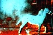 Berlin Horse