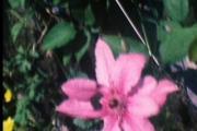 Garden For