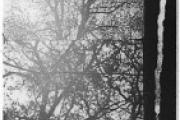 3/60 Trees in Autumn